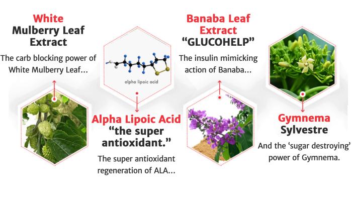 GlucoBurn Advanced Formula Ingredients